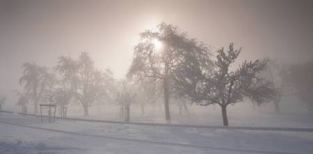 Group of Fruit Trees w/ Sunstar and Fog Cantone o