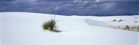 Yucca White Sands National Monument NM