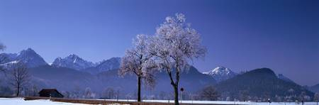 Winter Scene near Schwangau Germany