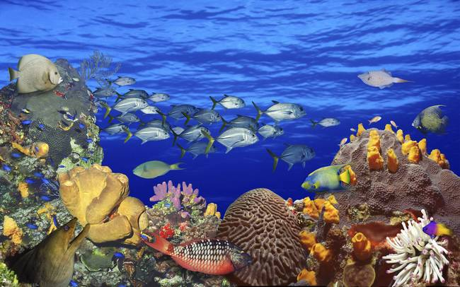 Stunning tropicalfish artwork for sale on fine art prints for Saltwater fish for sale near me