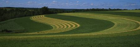 Curving crops in a field