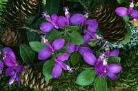 Fringed polygala flowers blooming around fallen p
