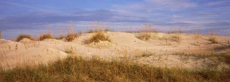 Sand dunes on the beach Anastasia State Recreatio