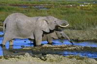 Adult and baby elephant in water hole
