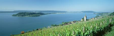 Vineyards w\Village Ligerz and Lake Biel Bern Swi