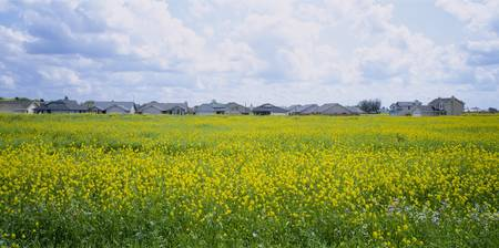 Panoramic view of houses in a field
