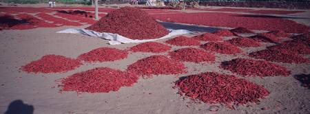 Red chilies drying at a farm