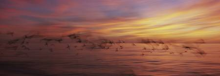 Flock of birds flying over a sea