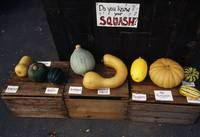 Variety of squash on wooden crates