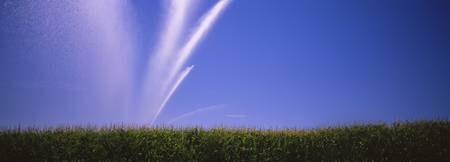 Water being sprayed on a corn field