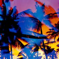 """""""Silhouette of palm trees at sunset"""" by Panoramic_Images"""