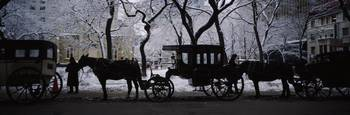 Silhouette of horse drawn carriages