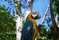 Low angle view of blue and gold macaw on perch