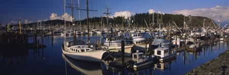 Sailboats moored at a harbor