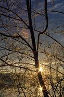 Double sunstar behind frosted tree branches