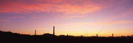 Sunrise Organ Pipe Cactus National Monument AZ