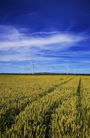 Windfarm Beyond Wheat Field