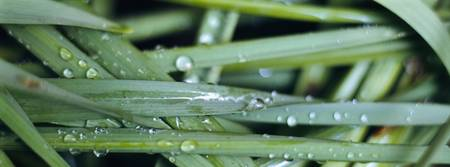 Close-up of dew drops on a blade of grass
