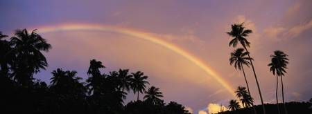 Rainbow between palm trees at dusk