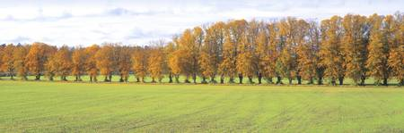 Row of Trees Uppland Sweden