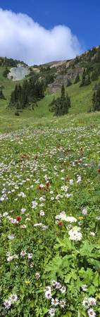 Wildflowers Chilcotin Mtns BC Canada