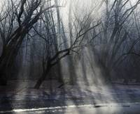Sunbeams through mist and frosted trees