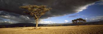 Tree w\storm clouds Tanzania