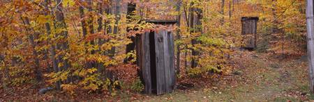 Outhouses in a forest