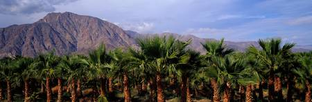 (Date) Palm Grove (near Borrego Springs) Californ