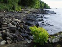 Rocks and trees along Lake Superior shoreline