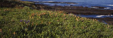 High angle view of flowers growing on a headland