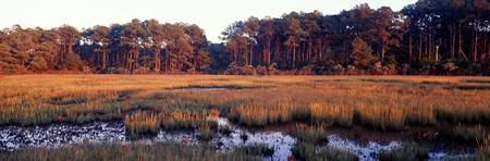Barrier Islands Chincoteague VA