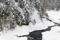 Snow-covered trees along Brule River