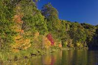 Autumn color trees along Beauty Lake shoreline