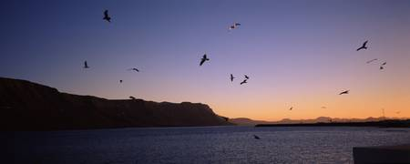 Birds flying over the sea at dawn