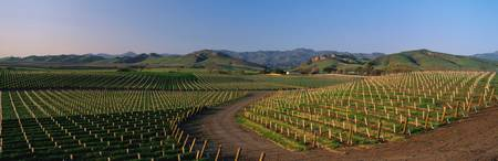 Vineyards Santa Ynez Valley CA
