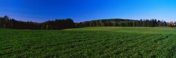 Green Fields Lyndonville VT