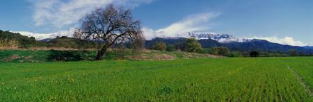 Green Field Ojai CA