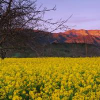 """Mustard Topa Topa Mountains CA"" by Panoramic_Images"
