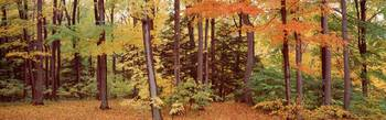 Autumn trees in a forest