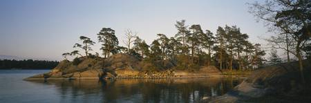 Pine trees on an island