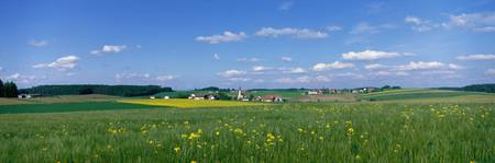 Field with Flowers near Vilsbiburg Germany