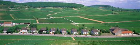 Rural Scene with Houses Beaune Bourgogne France
