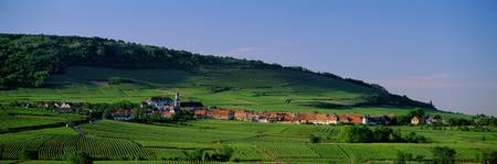 Vineyard Haut-Rhim Alsace Saint Hippolyte France