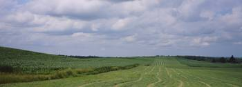 Panoramic view of a field