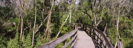 Boardwalk passing through a forest Lettuce Lake P