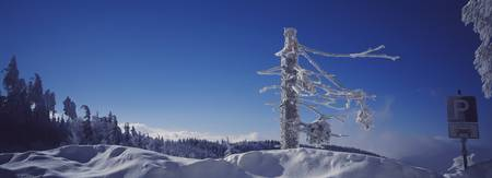 Bare tree on a snow covered landscape with Parkin