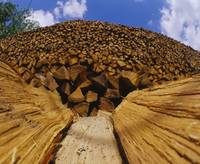 Heap of firewood