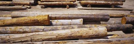 High angle view of stack of logs in a lumberyard