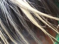 The Horse's Mane